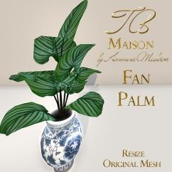 TB Maison Fan Palm